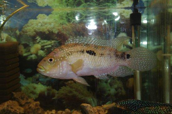 The Aquarium and the Black Sea Museum: какая-то рыба