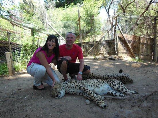 Cango Wildlife Ranch : The sleepy cheetahs