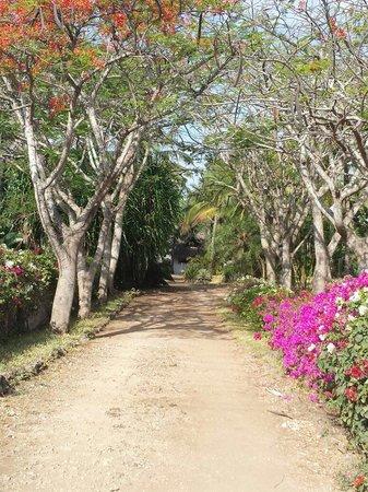 Shambani Cottages: Viale di Shambani