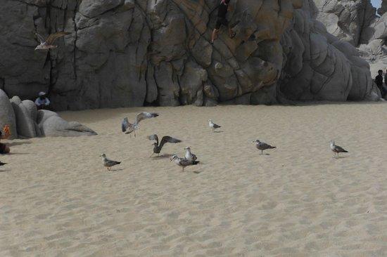 Playa del Amor : Gaviotas en la playa de los enamorados