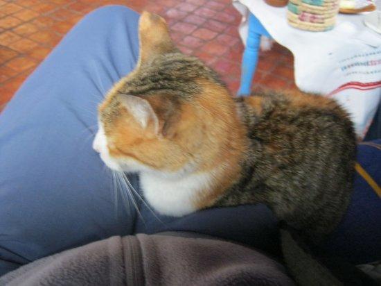 Dar Echchaouen : Cat on lap