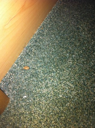 Campanile Brussels Vilvoorde: Food on the floor left by the previous resident