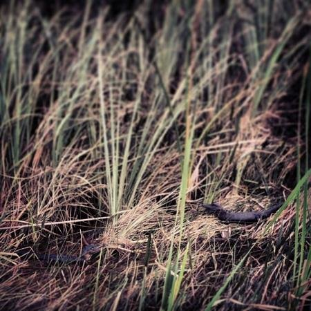 Everglades Safari Park: Two baby gators! Aren't they sweet?!