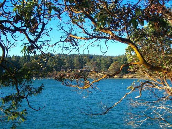 Mayne Island Resort : Bennet Bay, arbutus tree, and the resort