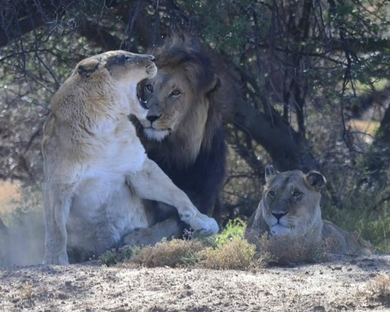 "Inverdoorn Game Reserve: ""Not today, pal."""