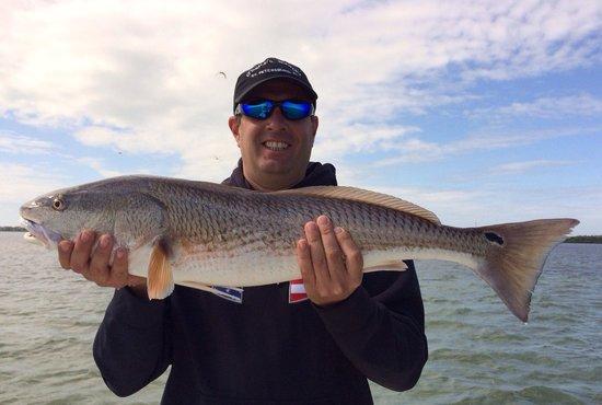 Tampa FL Fishing Charters : Redfish