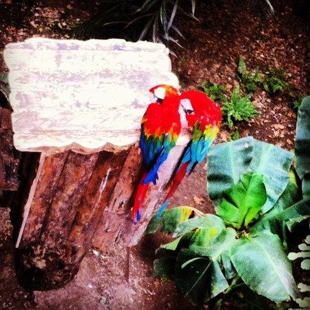 Izmir Wild Life Park: Aşk