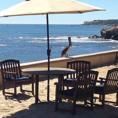 Las Olas : Pool/beach area