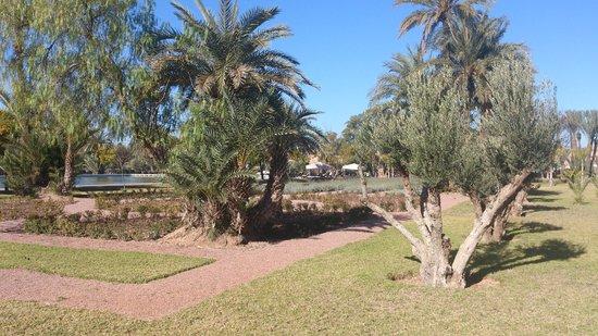 Pullman Marrakech Palmeraie Resort and Spa: Tuinen