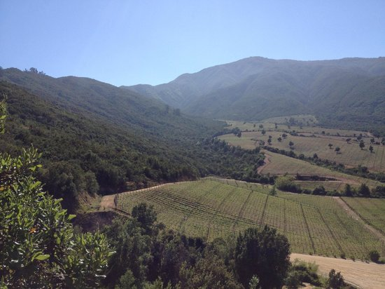 Chilean Wine Lovers: Central Countryside