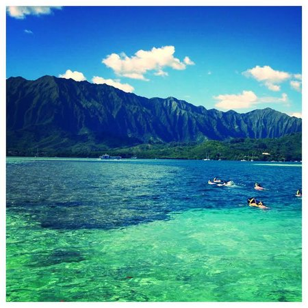Snorkeling Horse Shoe Reef In Kaneohe Bay Picture Of Holokai