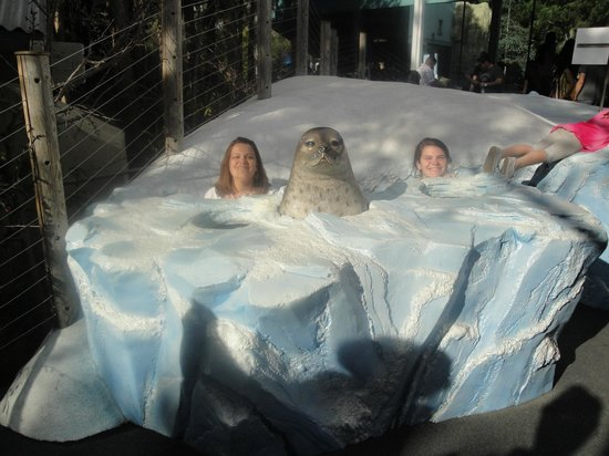San Diego Zoo: Focas