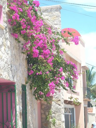 Cabanas Maria Del Mar: Flowers by Front of Hotel