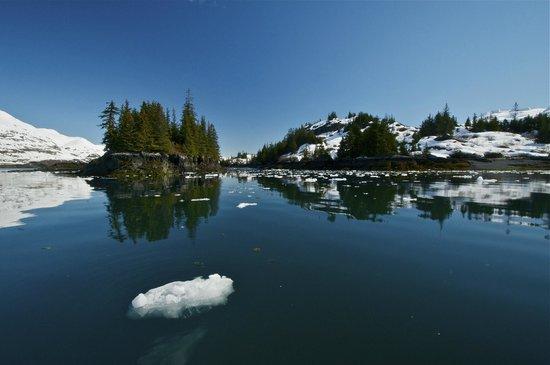 26 Glacier Cruise by Phillips Cruises and Tours : Willard Island in Blackstone Bay - Photo: Bill R.