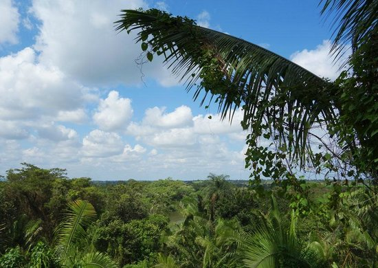 Lower Dover Field Station & Jungle Lodge: jungle view with mayan clouds