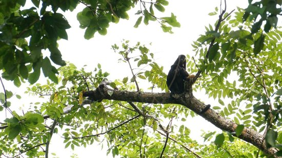 Hostel Wunderbar: Watch the monkeys play in our property