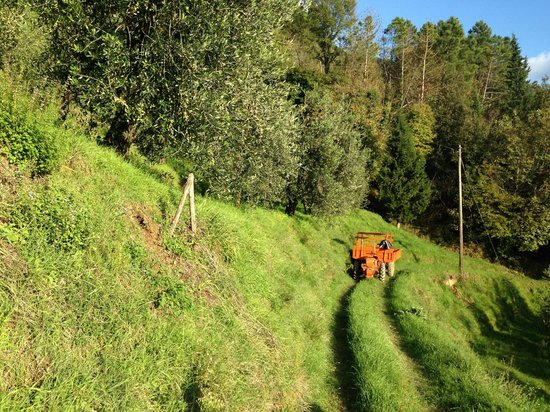 Tasty Tuscany: Anyone for fresh herbs from Pat's garden