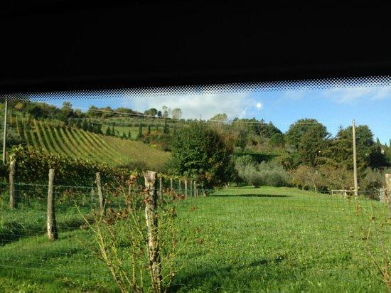 Tasty Tuscany: Tuscany Countryside
