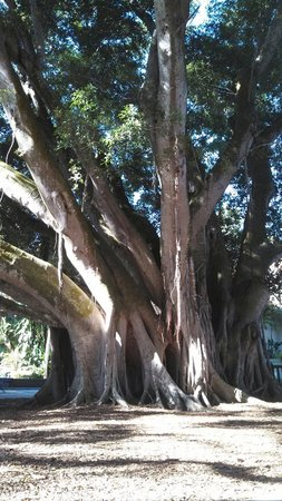 Marie Selby Botanical Gardens: Beautiful Tree