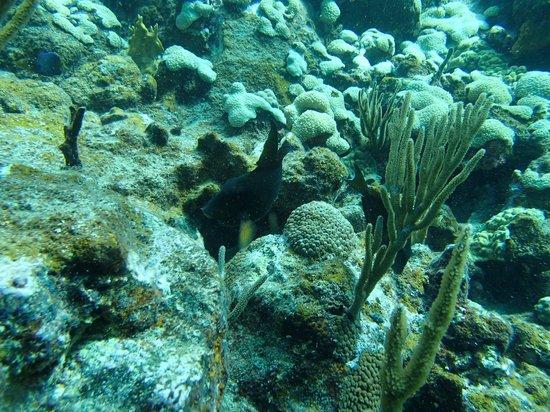 Sunchaser Scuba Ltd.: diving