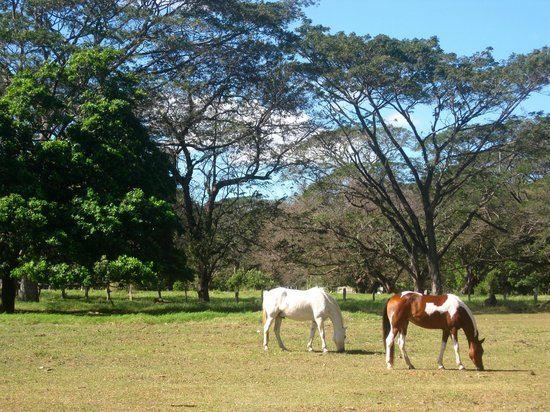 Casagua Horses Tours: Saturday morning at Painted Pony
