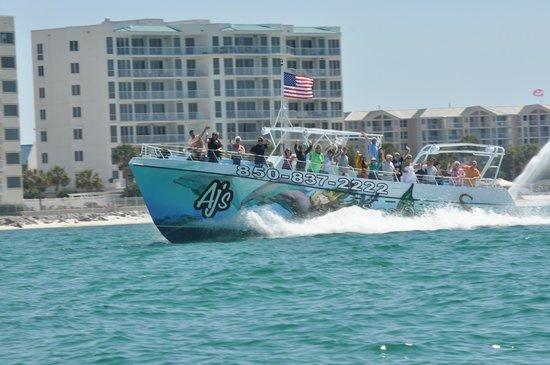 AJ's Water Adventures: Dolphin Cruise Destin Fl