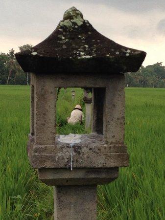 The Chedi Club Tanah Gajah, Ubud, Bali – a GHM hotel: Inside the hotel grounds...