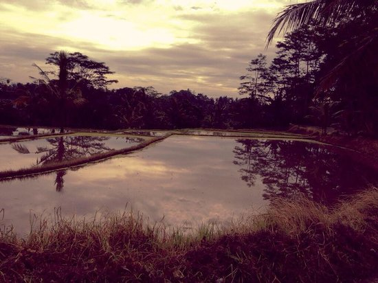 The Chedi Club Tanah Gajah, Ubud, Bali – a GHM hotel: View during the morning walk around the paddies and nearby village