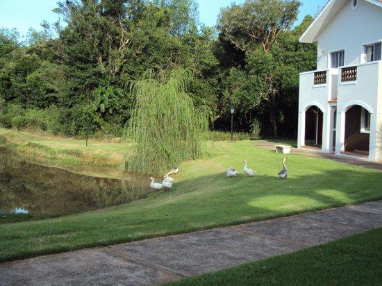 Wish Resort Foz do Iguaçu : lago ao lado
