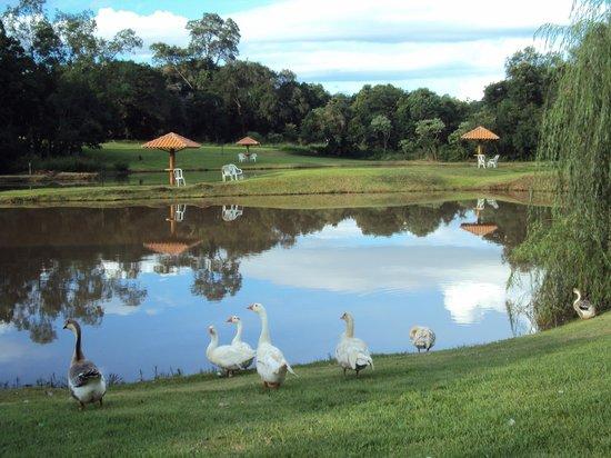 Wish Resort Foz do Iguaçu : lago com gansos