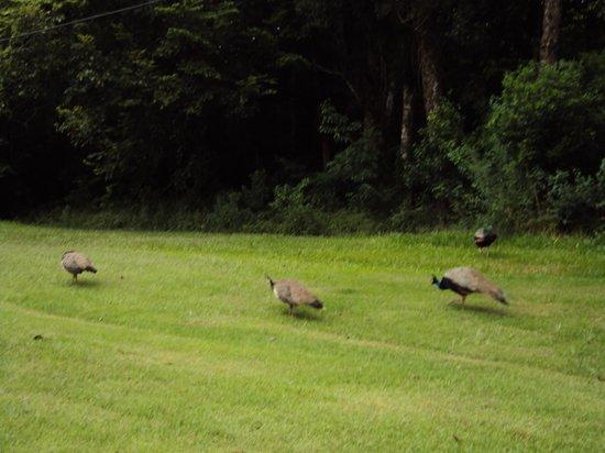Wish Resort Foz do Iguaçu : aves passeando em frente aos aptos