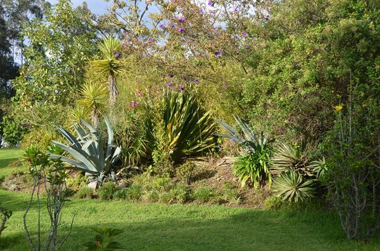 Las Palmeras Inn: One of the side gardens