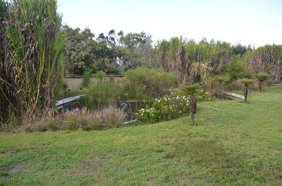 Las Palmeras Inn: One of the KOi ponds