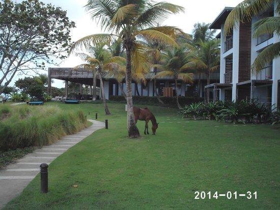 Taxi Horses: The W Resort & Spa, Isla de Vieques