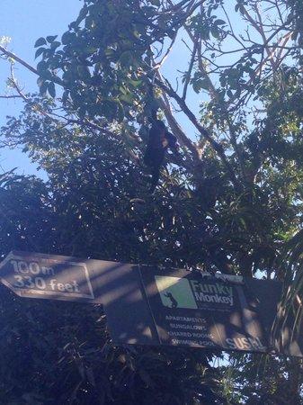 Funky Monkey Lodge : Le scimmiette ci sono!!!!!! :-))