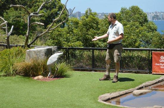 Taronga Zoo: Bird Show