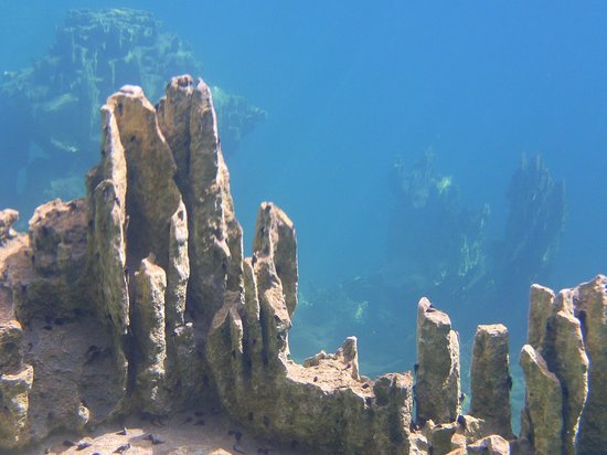 Barracuda Lake: view underwater