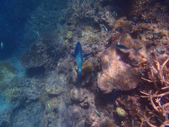 Cruise Whitsundays : Knuckle Reef