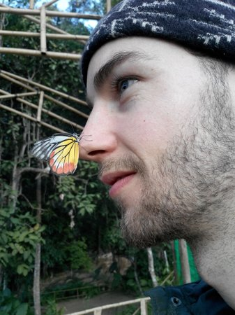 Kuang Si Falls Butterfly Park: Butterfly