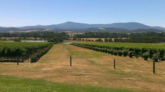 Domaine Chandon: Even in 42C heat it is still spectacular