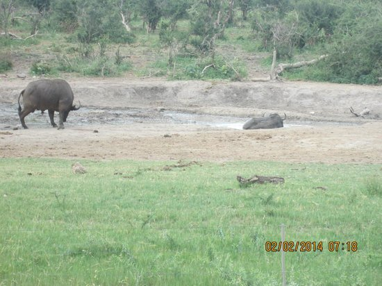 Jamala Madikwe: Water hole in front of lodge
