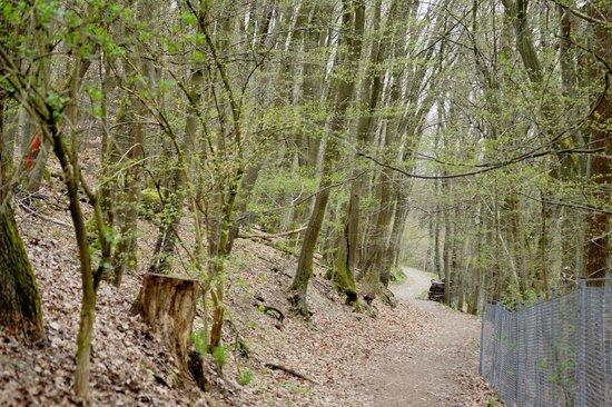 Naturpark Hochtaunus照片