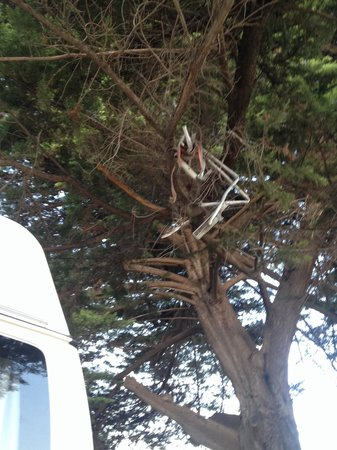 Lorne Foreshore Caravan Park: Rubbish In a tree next to our pitch!