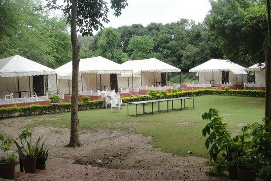 The Aravali Tent Resort: Morning Pic