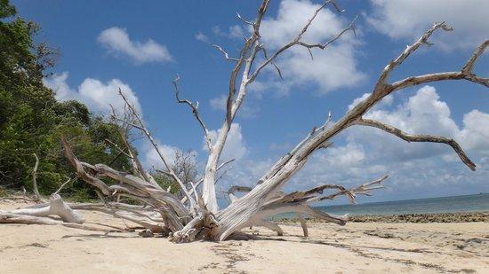 Green Island : Nice Tree
