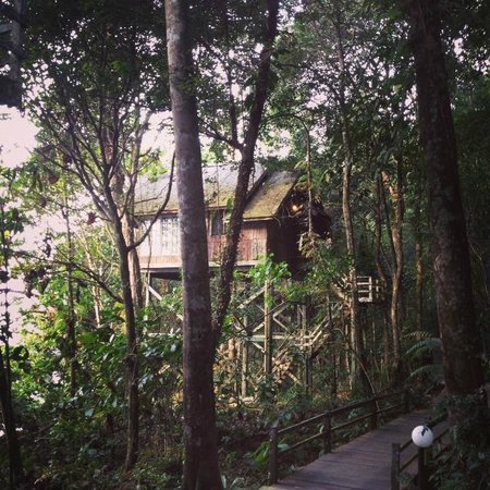 Permai Rainforest Resort: Tree house