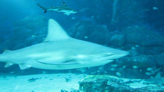 Marine Life Park : акула