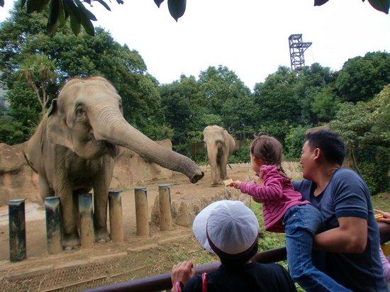 Itozu no Mori Zoological Park: Zo San.