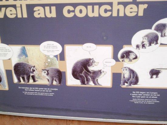Antwerp Zoo (Dierentuin): зоопарк