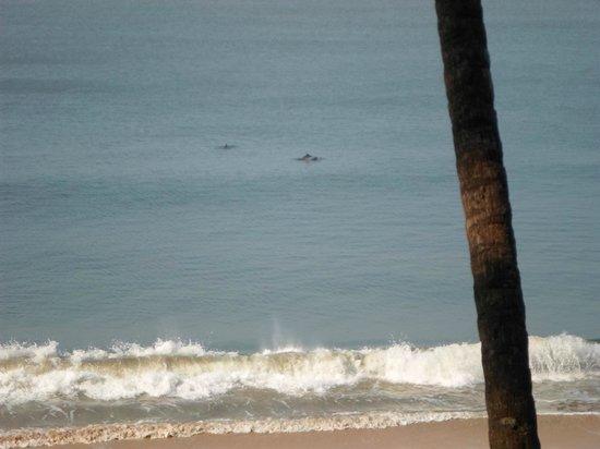 Ocean Hues Beach House: Dolphins